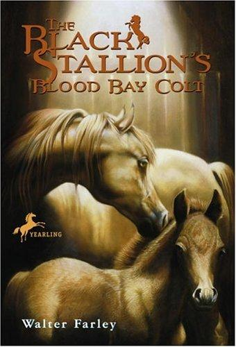 The black stallion's blood bay colt