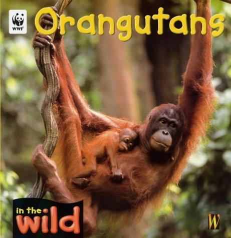 Download Orangutans (In the Wild)