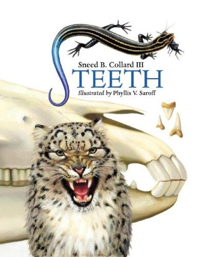Download Teeth