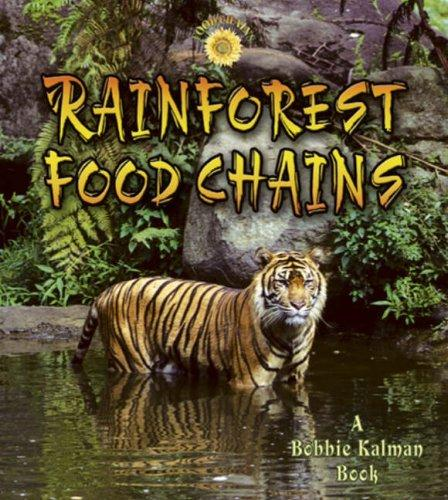 Download Rainforest Food Chains