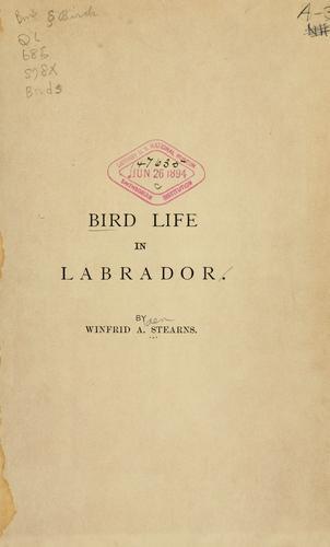 Bird life in Labrador.