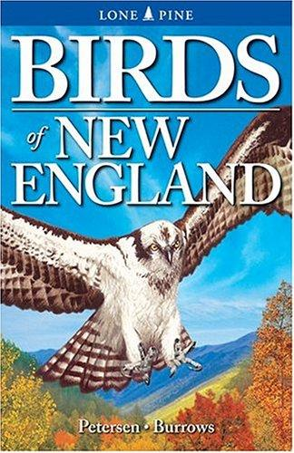 Image for Birds of New England